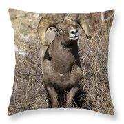 Rocky Mountain Big Horn Sheep Throw Pillow