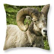 Rocky Mountain Bighorn Sheep Throw Pillow