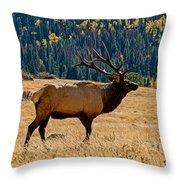 Rocky Mountain Bull Elk Throw Pillow