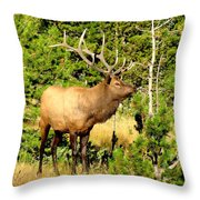 Rocky Mountain Elk Throw Pillow