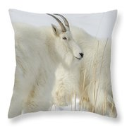 Rocky Mountain Goats In Wyoming Winter Throw Pillow