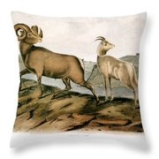 Rocky Mountain Sheep, 1846 Throw Pillow