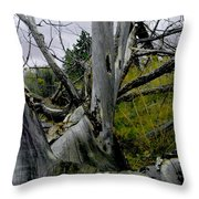 Rolling Log 2 Throw Pillow