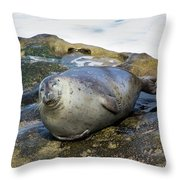 Roly Poly Seal Throw Pillow