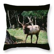 Roosevelt Elk Throw Pillow