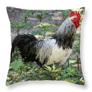 Rooster In The Coop Throw Pillow