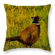 Rooster Pheasant Throw Pillow