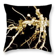 Root Nodules On Soya Plant Throw Pillow