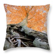 Root Of The Matter Throw Pillow