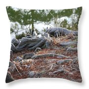 Rooted Lake Edge Throw Pillow