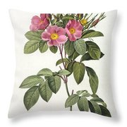 Rosa Carolina Corymbosa Throw Pillow by Pierre Joseph Redoute
