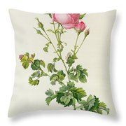Rosa Centifolia Bipinnata Throw Pillow