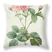 Rosa Centifolia Caryophyllea Throw Pillow