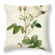 Rosa Centifolia Mutabilis Throw Pillow