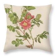 Rosa Cinnamomea The Cinnamon Rose Throw Pillow