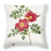 Rosa Eglantera Punicea Throw Pillow
