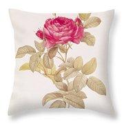 Rosa Gallica Pontiana Throw Pillow by Pierre Joseph Redoute