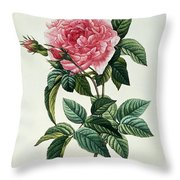 Rosa Gallica Regalis Throw Pillow
