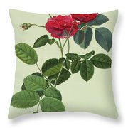 Rosa Holoferica Multiplex Throw Pillow