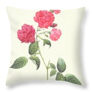 Rosa Indica Caryophyllea Throw Pillow