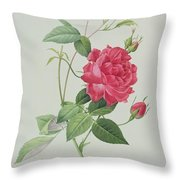 Rosa Indica Cruenta Throw Pillow by Pierre Joseph Redoute