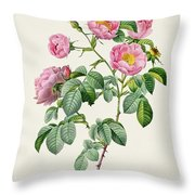 Rosa Mollissima Throw Pillow by Claude Antoine Thory