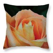 Rose 37 Throw Pillow