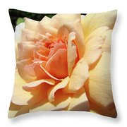 Rose Art Peach Orange Roses Sunlit Florals Giclee Baslee Troutman Throw Pillow