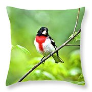 Rose-breasted Grosbeak 2 Throw Pillow