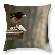 Rose Breasted Grosbeak Feeding Throw Pillow