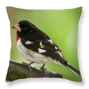 Rose-breasted Grosbeak Male Perched New Jersey  Throw Pillow