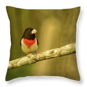 Rose Breasted Grossbeak Eying You Throw Pillow