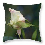 Rose Bud Throw Pillow