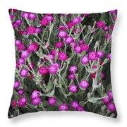 Rose Campion Throw Pillow