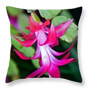 Rose-colored Christmas Cactus At Pilgrim Place In Claremont-california  Throw Pillow