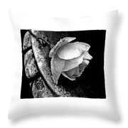 Rose In A Birdbath Throw Pillow
