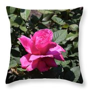 Rose In Flower Bed Throw Pillow