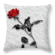 Rose In Snow Throw Pillow