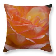Rose In Yellow And Pink I Throw Pillow