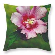 Rose Of Sharon Blossom Throw Pillow