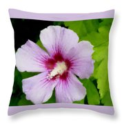 Rose Of Sharon Close Up Throw Pillow