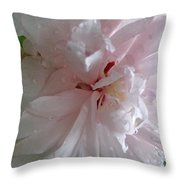 Rose Of Sharon In The Rain Throw Pillow