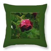 Rose On The Vine Throw Pillow