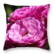 Rose Pink Purple Roses Flowers 1 Rose Garden Sunlit Flowers Baslee Troutman Throw Pillow