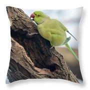 Rose-ringed Parakeet 03 Throw Pillow