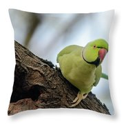 Rose-ringed Parakeet 04 Throw Pillow