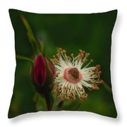 Rose Stages Throw Pillow