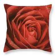 Rose Waiting In The Rain Throw Pillow