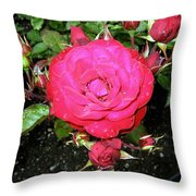 Roses 5 Throw Pillow