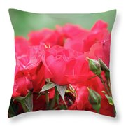 Roses Close Up Nature Spring Scene Throw Pillow